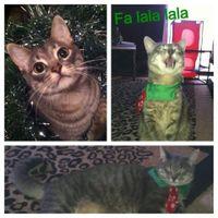 Pet PSA: No Holiday Plants!!!!!