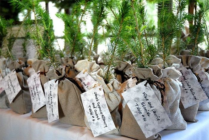 Seedlingtree Wedding Favors Weddings Do It Yourself Wedding
