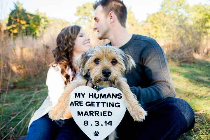 I just got all of my engagement pictures!!!!! (more pics- warning cuteness overload lol)