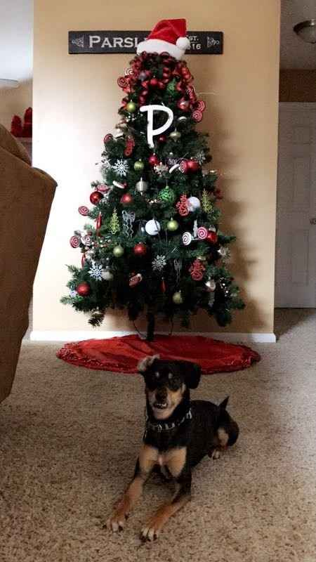 NWR - xmas pictures with fur-babies!