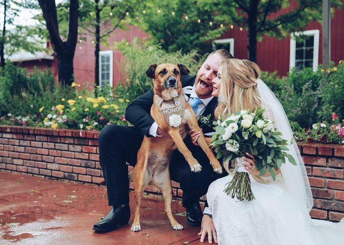Flower Girl or Ring Bearer Dog? 3