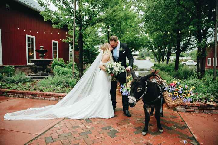 We hired a beer donkey for our wedding (probably the cheapest thing we got hahaha he was $200 for co
