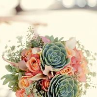 Succulents: In or Out? - 2