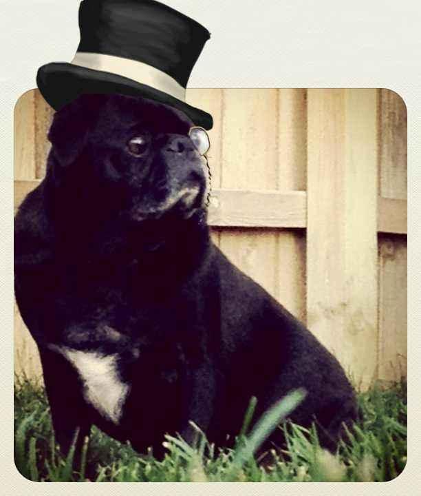 Pugs and weddings