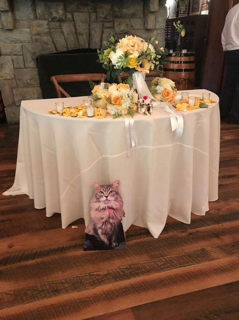 How to include our cats in the wedding day, without having them there? 4