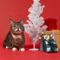 NWR: Holiday Cat Time :)