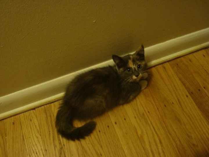 NWR: longest week ever. Need kitten pictures