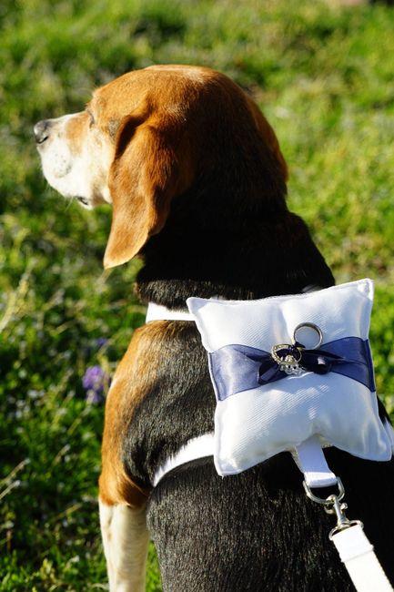 Puppy ring bearer - 1