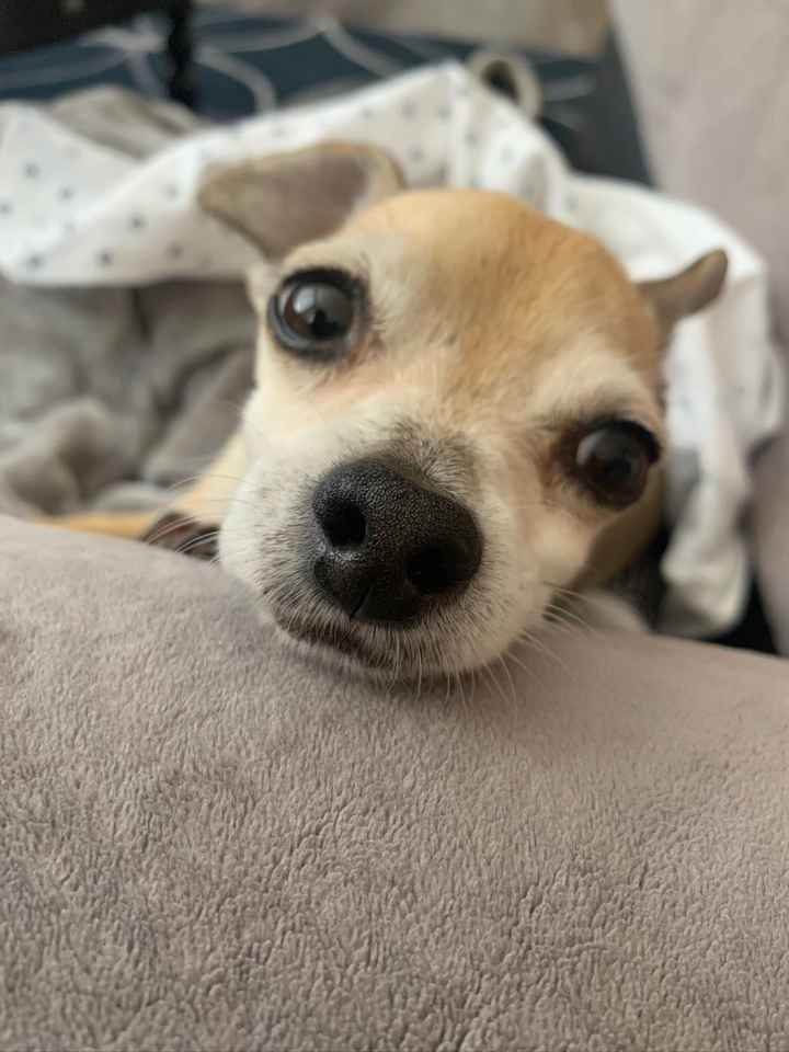 Sick dog. Post pretty things? - 2