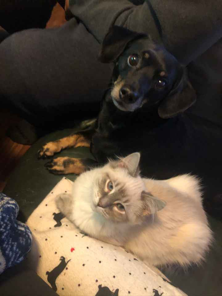Show me your fur babies you and your SO have together! - 2