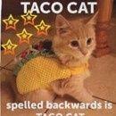 Mrs. TacoCat