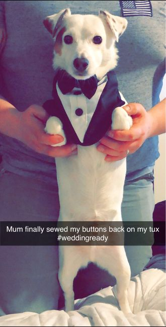 Anyone Having Their Dog At Their Wedding? 1