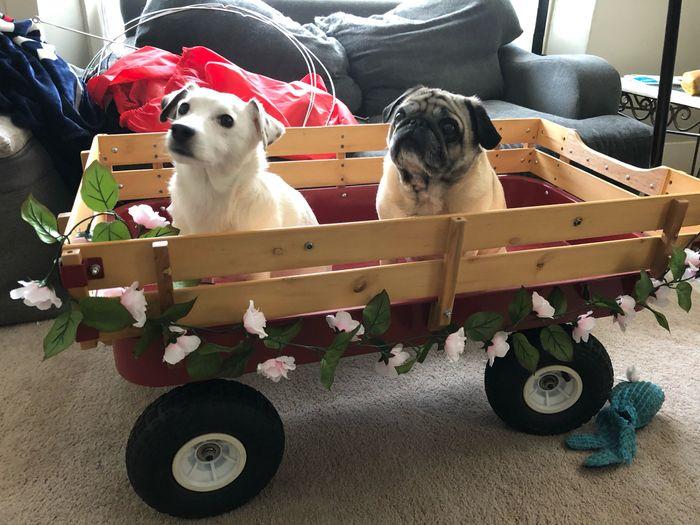 Anyone Having Their Dog At Their Wedding? 6