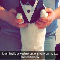 Anyone Having Their Dog At Their Wedding? - 1