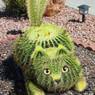 Kactus Kat