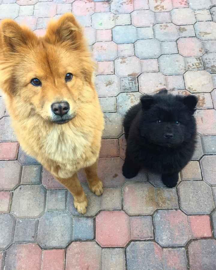 When Kovu bear was a puppy