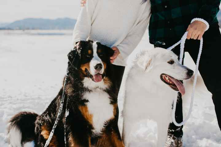 Furbabies Included in Wedding Day - 1