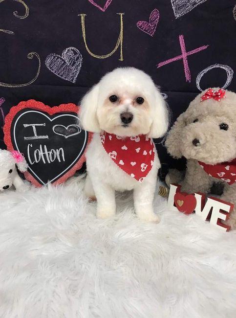 Cotton: fur baby #1!