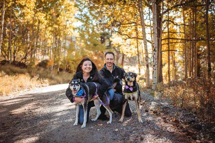 Fall Session with Dogs