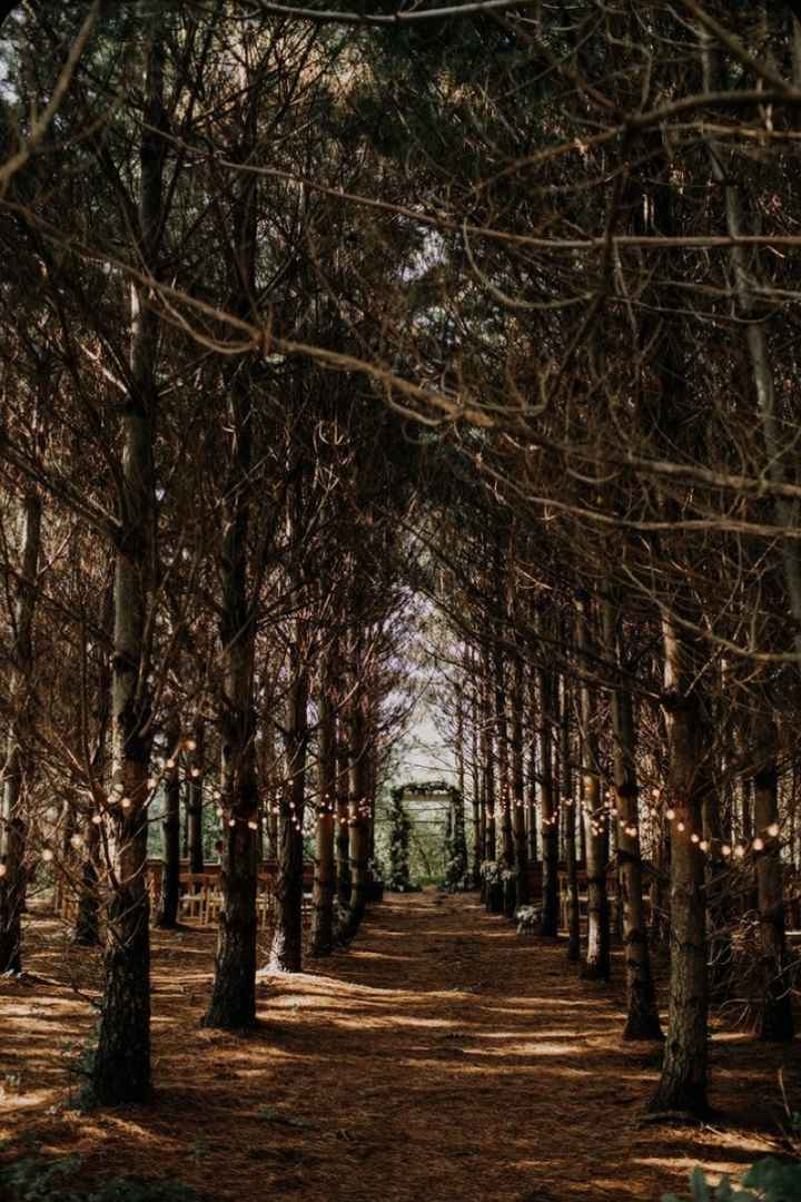 Forest Weddings:  Let's See Your Style Inspiration Pictures! 🌲📷 4