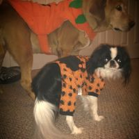 NWR: pets in costumes!!