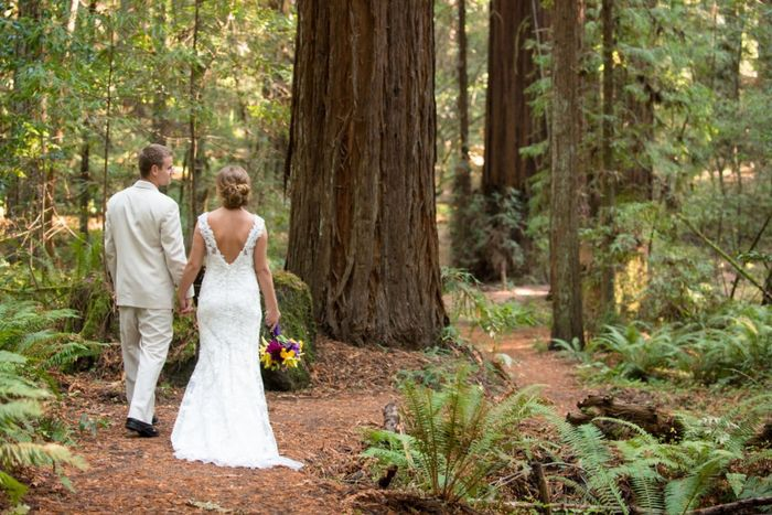 Low Budget Small Wedding by Redwood trees? 1