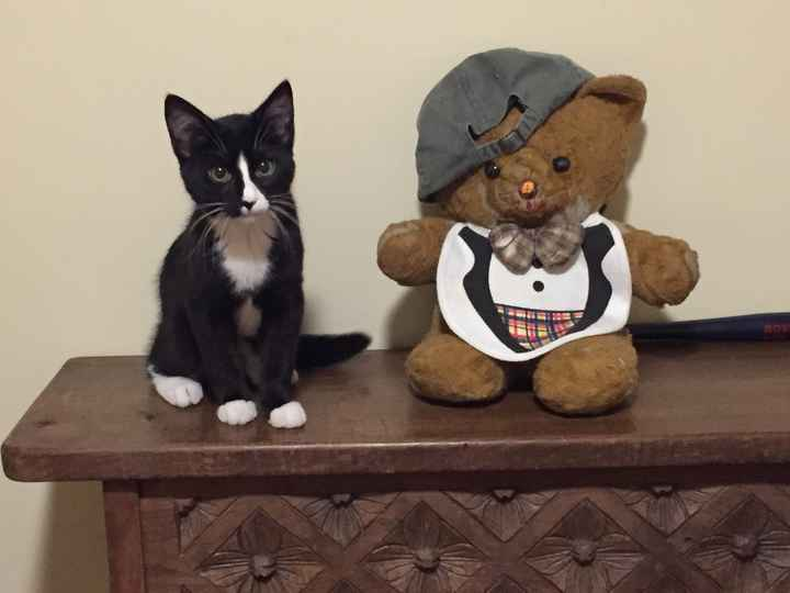 New to the site! -- Updated with kitten picture!