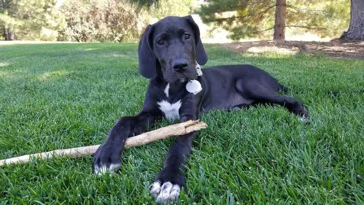 Galaga when she was only 14 weeks old and 35lbs!