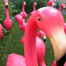 lawn_flamingo