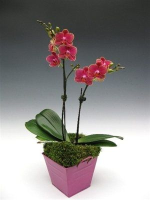 Potted Orchids As Centerpieces Risky Weddings Planning
