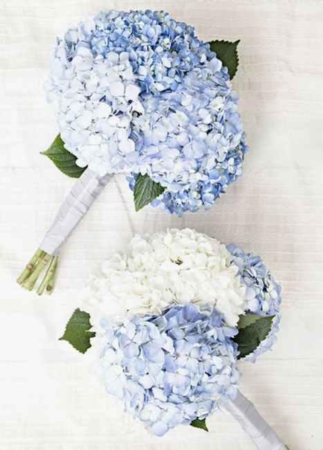 All Things Blue! 4