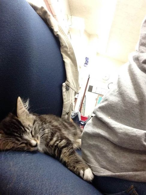 NWR: New kitty!