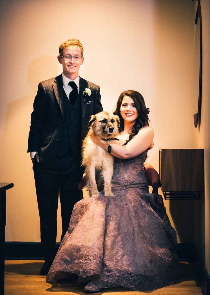 Including dogs in your wedding day - 1