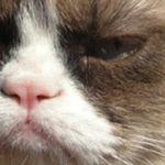GrumpyCatRebecca