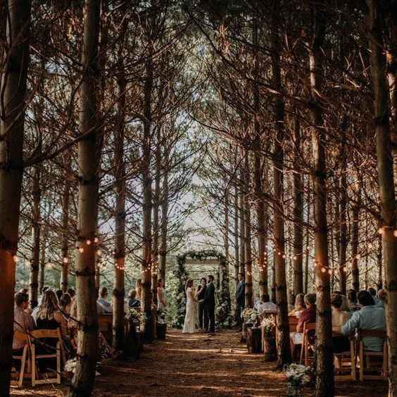 love the lights and treed path