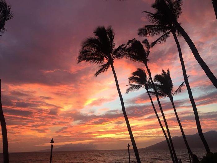 Maui pro bam 9