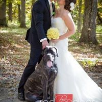 Pets Incorporated Into Wedding?