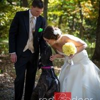 Any one having their dogs in their wedding?? She me pictures of your dogs.