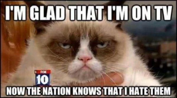 I love Grumpy Cat Weddings Community