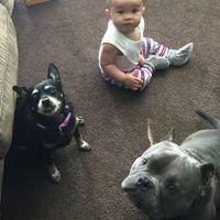 NWR- My fur kids
