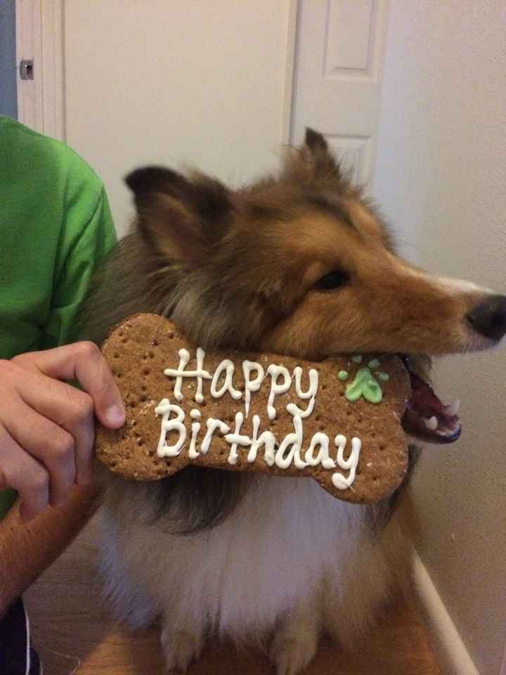 NWR: today is my Pups 2nd birthday!! Do you and your FH have a pet? Show pics!!!