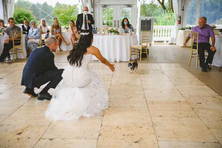 Including dogs in your wedding day - 3