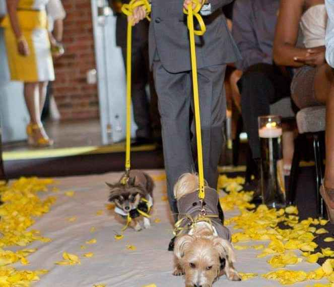 Are You Incorporating Your Pets In Your Wedding? 🐶🐱 - 3