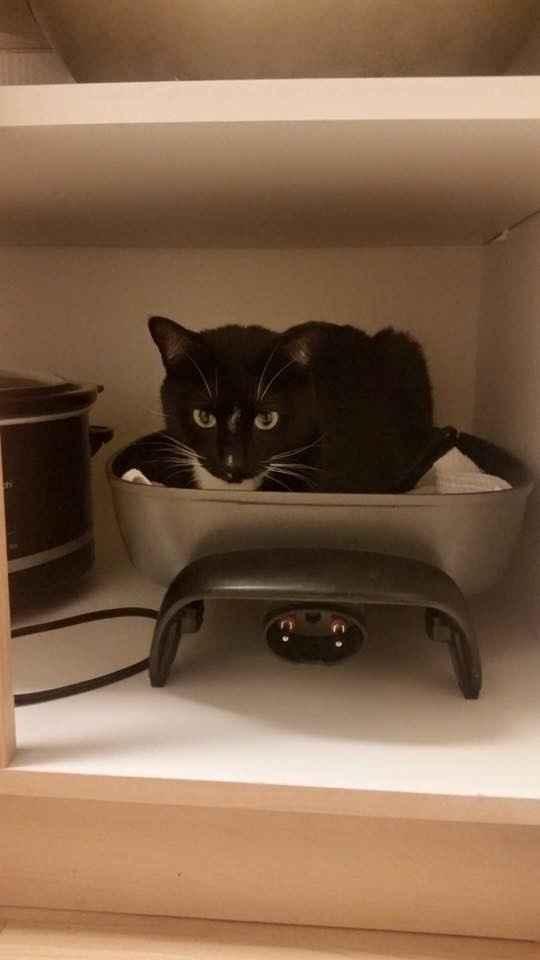 Nwr: strange cat behavior