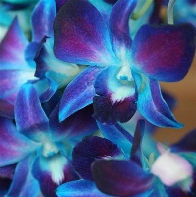 What Flowers Go Well With Blue Orchids Weddings Planning