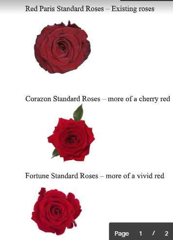 Flower Choices (they used the Red Paris)