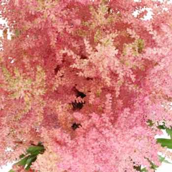 Flowers - 7