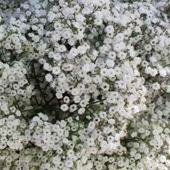 Flowers - 8