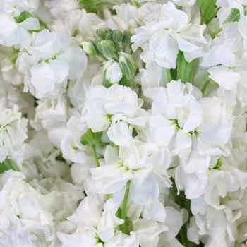 Flowers - 11