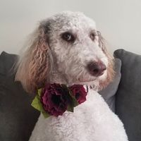 Flowers For The Pup